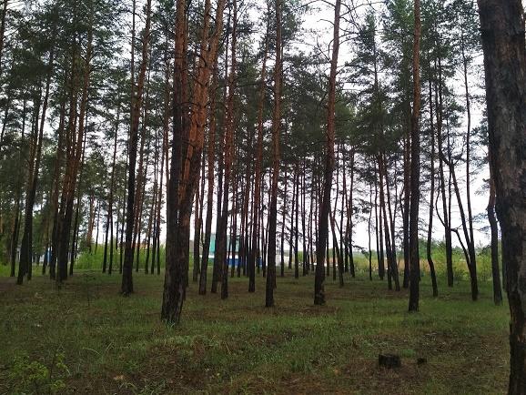 016021 (7)016021 * 2 дома на участке в Новопокровке